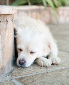 Free The Dog Sleeps Stock Image - 22518241