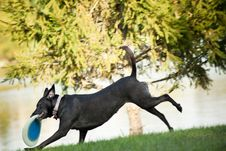 Free Dog Running With Frisbee Royalty Free Stock Images - 22519179
