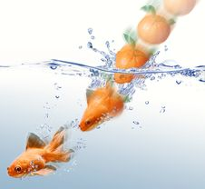 Free Mandarin Splashing Into Water And Transforming. Stock Image - 22519831