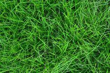 Free Green Field Stock Image - 22523291