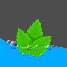 Free Water Background With Green Leaves Stock Images - 22523484