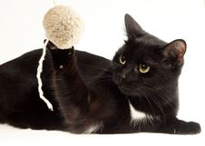 Cute Black Cat Royalty Free Stock Photography
