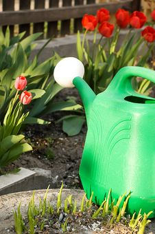 Free Watering Can Among Red Tulips Royalty Free Stock Photo - 22531285
