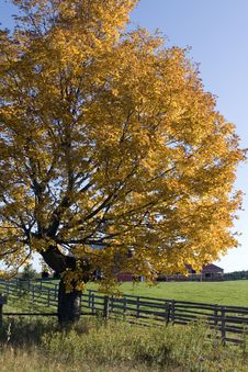 Free Tree In Autumn Royalty Free Stock Photography - 22533607