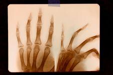 RTG Print, Human Hands Royalty Free Stock Photo