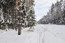 Free Ski Track In Winter Forest Royalty Free Stock Photography - 22538837