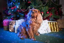 Free Little Santa Helper Stock Images - 22539884