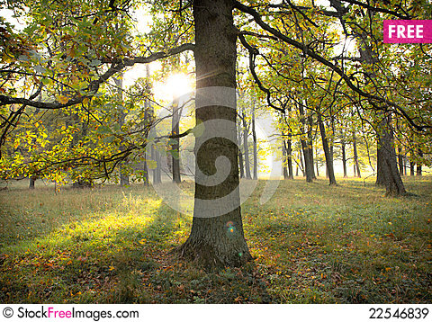 Free Sun Through Trees Royalty Free Stock Images - 22546839