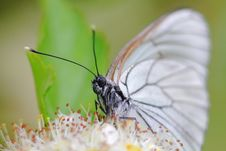 Free The Butterfly. Wild Flower. Royalty Free Stock Image - 22540276