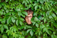 Free Face Among Ivy. Stock Photo - 22541660