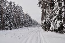 Free Trails In Winter Forest Stock Image - 22543931