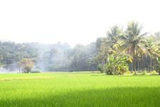 Free Lush Green Paddy Field Stock Photo - 22545950