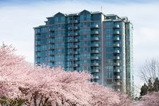 Free Cherry Blossoms And Modern Apartment Stock Photos - 22549383
