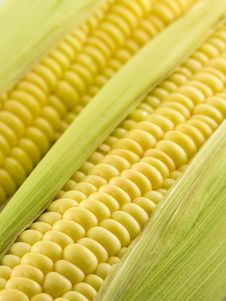 Sweet Corn With Corn Cob Royalty Free Stock Photography