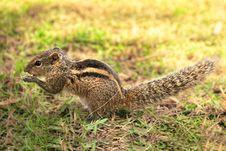 Free Closeup Of A Little Female Chipmunk Stock Image - 22551711