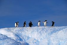 Free Adelie Penguins Stock Images - 22551994