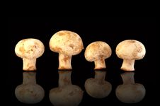 Free Four Fresh Field Mushrooms Royalty Free Stock Images - 22556969
