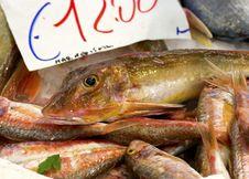 Free Fish Stock Photos - 22561463