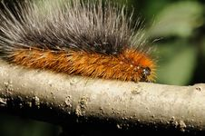 Free Caterpillar Royalty Free Stock Photo - 22562015