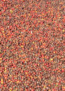 Free Coffee Beans Royalty Free Stock Photos - 22576278