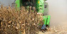 Free Combine Harvesting Corn Stock Image - 22570031