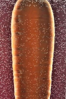 Carrot In Water With Bubbles Stock Image