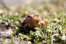 Free Toad Royalty Free Stock Photos - 22578918