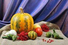 Free Pumpkin Stock Image - 22584081
