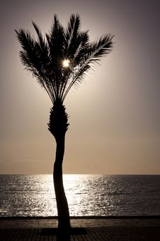 Free Palm Tree Silhouette On The Seafront Stock Photography - 22589352