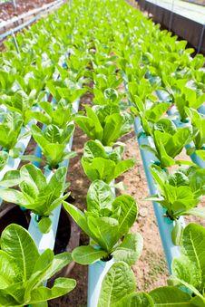 Free Nontoxic Vegetable Garden Royalty Free Stock Photo - 22589875