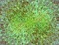 Free Fantastic Grass Royalty Free Stock Image - 2267756