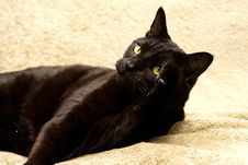 Free Black Cat Sticking Up Its Paw Stock Photos - 2261003