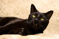 Black Cat With Mouth Open Royalty Free Stock Image