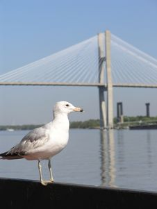 Free Seagull & Bridge 1 Stock Photo - 2261740