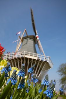 Dutch Windmill And Colorful Fl Stock Images