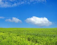Free Wheat Field Over Blue Sky Royalty Free Stock Image - 2262386