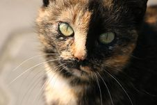 Free Two Color Cat Royalty Free Stock Images - 2265529