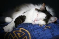 Free Sleeping Cat Royalty Free Stock Photos - 2266848