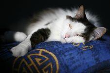 Free Sleepy Cat Stock Photos - 2266863
