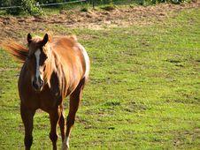 Free A Horse Walking 2 Royalty Free Stock Image - 2267266