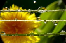 Free Droplets Royalty Free Stock Image - 2268156