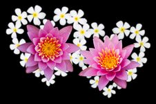 Free Heart-shaped Lotus Flower. Stock Photo - 22601210