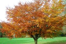 Free Trees In Autumn Stock Images - 22602154
