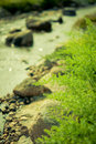Free Fern Leaves And Stream With Nature Light Royalty Free Stock Image - 22611696