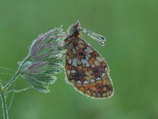 Free Moth Royalty Free Stock Photos - 22611788