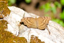 Free Brown Butterfly Stock Images - 22617454