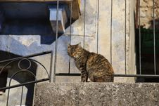 Free Blinded Cat On The Balustrade Stock Images - 22618174
