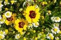 Free Yellow Flowers Stock Photos - 22620233
