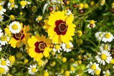 Free Yellow Flowers Stock Photos - 22620233