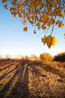 Free Autumn Royalty Free Stock Photos - 22624498